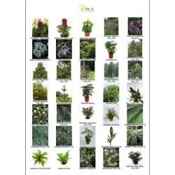 Base de photos Végétaux